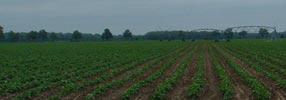 String bean field.