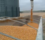 Corn being dumped into semi.